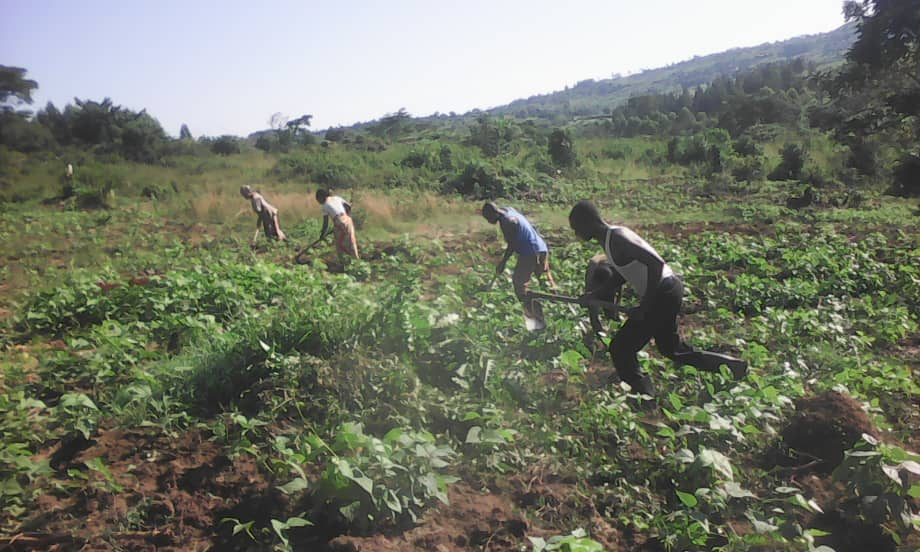 We're recruiting a Operations Lead to join our Agricultural Social Enterprise in Rwamwanja (Uganda)
